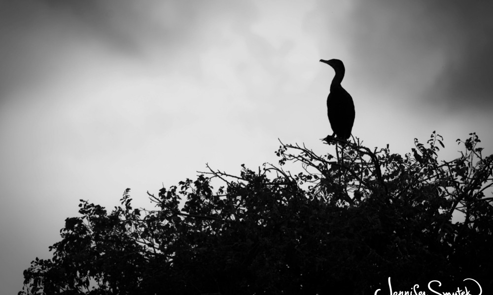 5 Day Black & White Photo Challenge | Day 4