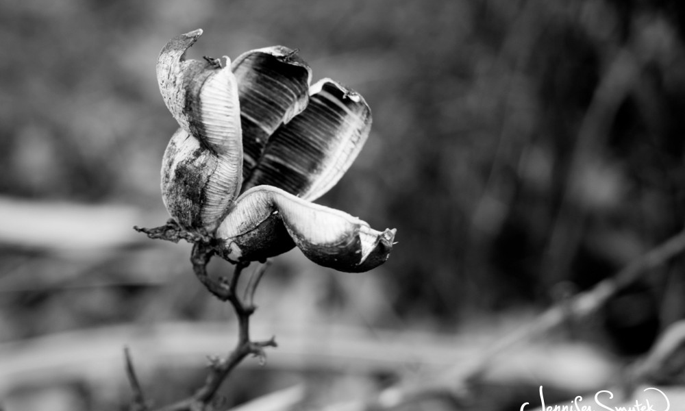 5 Day Black & White Photo Challenge | Day 3