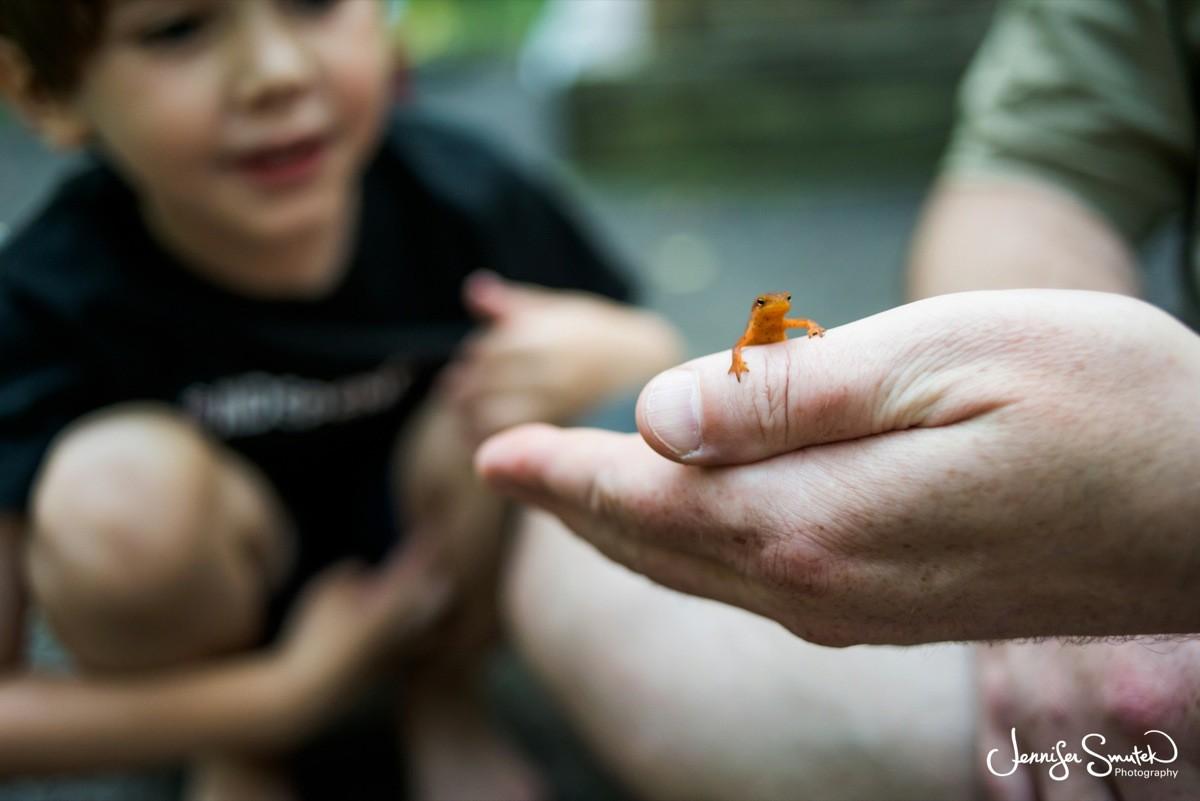 finding a newt