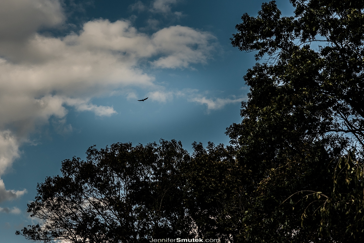 bird flying overhead of carroll county private residence wedding