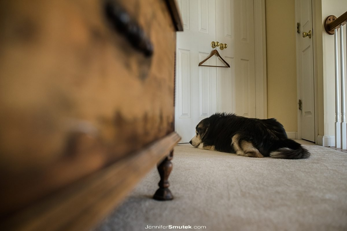 dog sitting by the door waiting for his owner